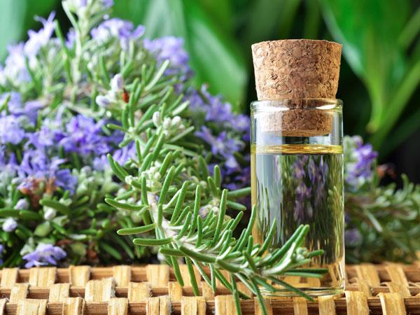 trị-mụn-bằng-tinh-dầu-rosemary